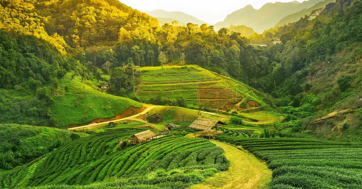 Tata Tea Reform